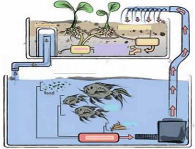Что такое аквапоника