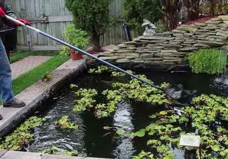 Как ухаживать за прудом на участке в зависимости от сезона?