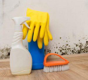 Как бороться с плесенью в вашем доме?