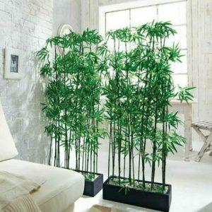 Комнатный бамбук – оригинальное украшение квартиры
