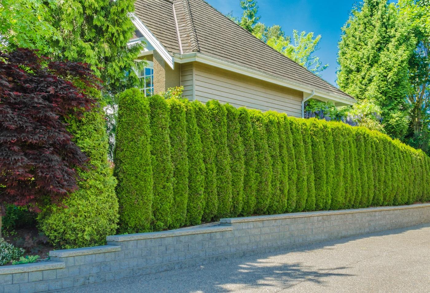 Як вибрати декоративну огорожу зі штучної трави?