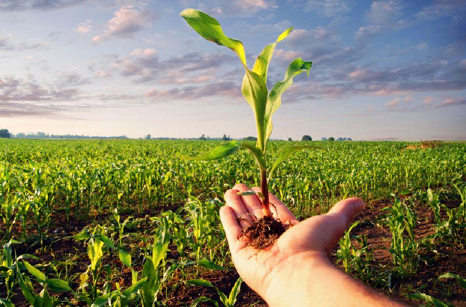 Украинский экспортер сельскохозяйственной продукции